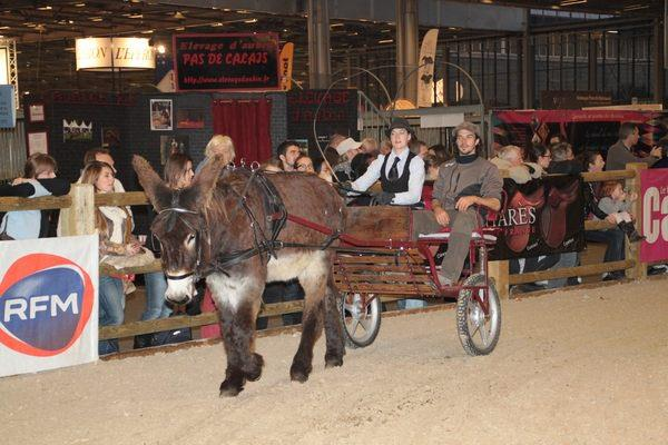 Salon du cheval de paris races mulassieres du poitou - Salon du cheval tarif ...