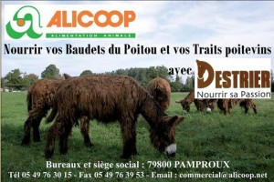 Alicoop