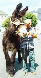 Cadichon, (élevage Patrault), premier prix au concours régional de Couhé Verac (86) en 1999 dans la catégorie des mâles de plus de trois ans.